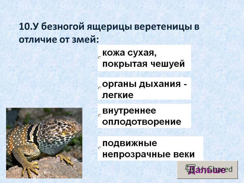 10. У безногой ящерицы веретеницы в отличие от змей: