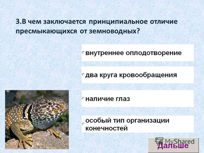 3. В чем заключается принципиальное отличие пресмыкающихся от земноводных?