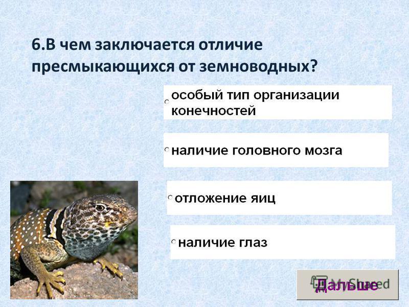 6. В чем заключается отличие пресмыкающихся от земноводных?