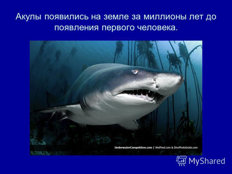 Акулы появились на земле за миллионы лет до появления первого человека.