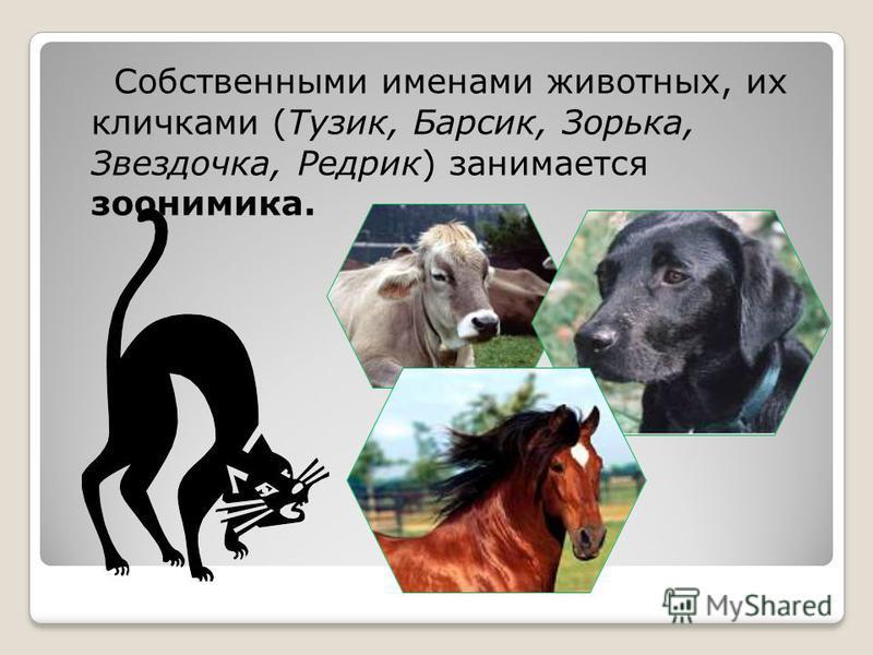 Собственными именами животных, их кличками (Тузик, Барсик, Зорька, Звездочка, Редрик) занимается зоонимика.