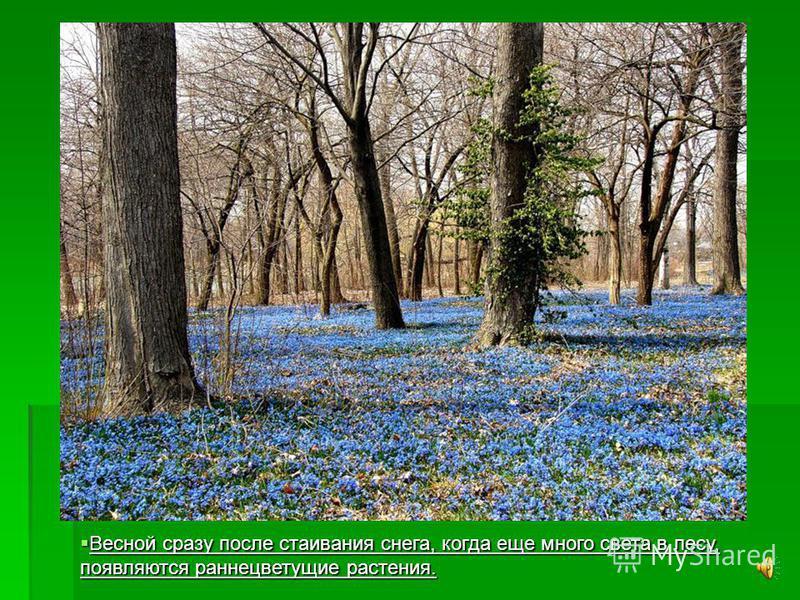 Особенно красив лиственный лес осенью, когда листья на деревьях как будто раскрашены разноцветными красками. Вот каким виделся осенний лес Ивану Бунину: Вот каким виделся осенний лес Ивану Бунину: «Лес, точно терем расписной, - «Лес, точно терем расп