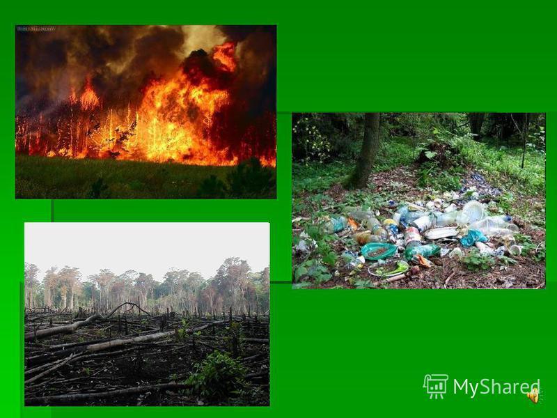 « Слуху нужен листьев шепот, « Слуху нужен листьев шепот, Зренью – лес в предутренней тиши. Зренью – лес в предутренней тиши. Нам деревья избежать помогут Нам деревья избежать помогут Одеревенения души…» Одеревенения души…»