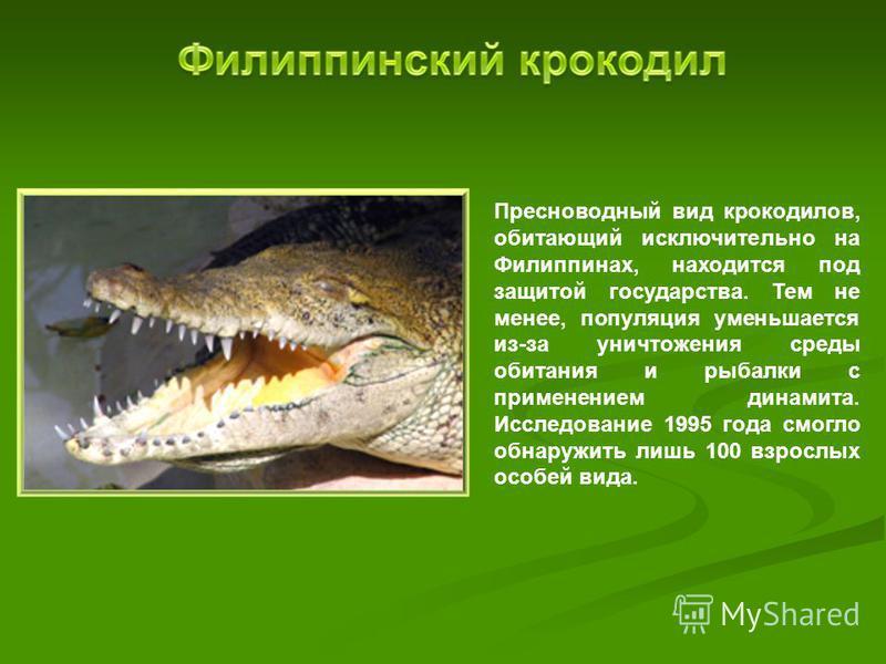 Пресноводный вид крокодилов, обитающий исключительно на Филиппинах, находится под защитой государства. Тем не менее, популяция уменьшается из-за уничтожения среды обитания и рыбалки с применением динамита. Исследование 1995 года смогло обнаружить лиш