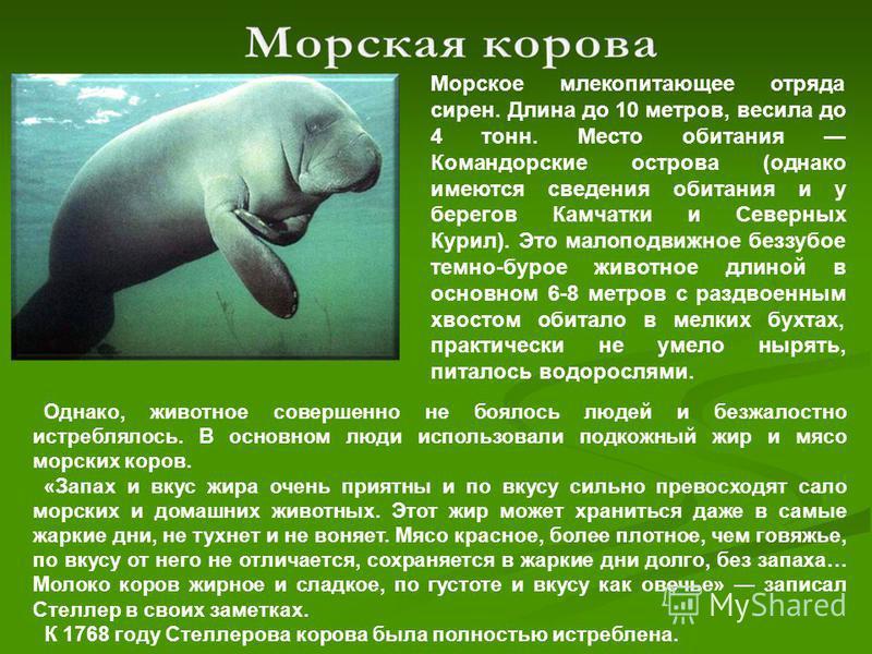 Морское млекопитающее отряда сирен. Длина до 10 метров, весила до 4 тонн. Место обитания Командорские острова (однако имеются сведения обитания и у берегов Камчатки и Северных Курил). Это малоподвижное беззубое темно-бурое животное длиной в основном