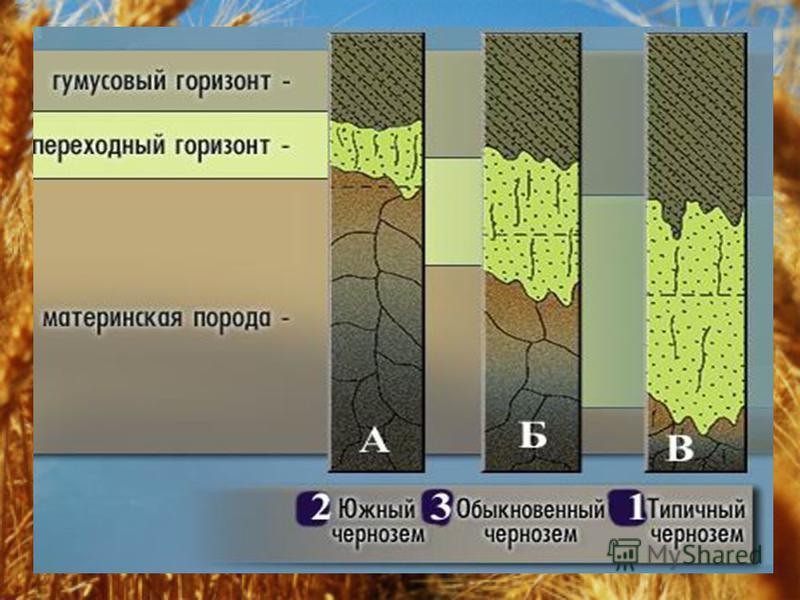 Практика - почва