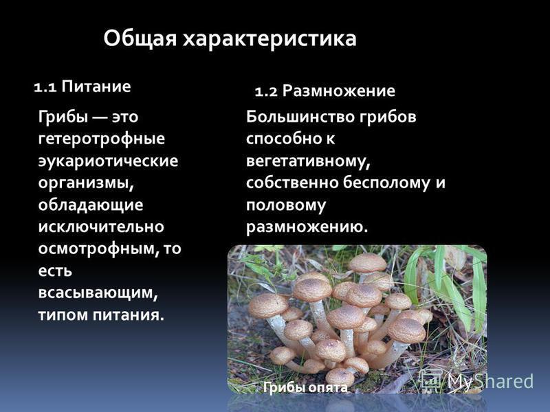 Общая характеристика 1.1 Питание Грибы это гетеротрофные эукариотические организмы, обладающие исключительно осмотрофным, то есть всасывающим, типом питания. 1.2 Размножение Большинство грибов способно к вегетативному, собственно бесполому и половому