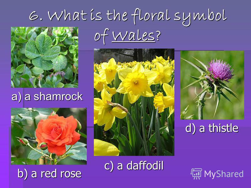 6. What is the floral symbol of Wales? a) a shamrock b) a red rose c) a daffodil d) a thistle