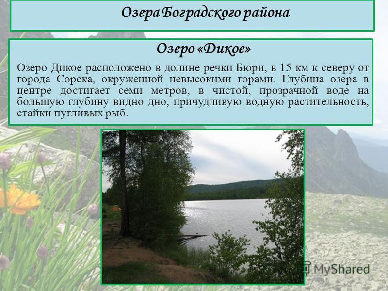 Озеро «Дикое» Озеро Дикое расположено в долине речки Бюри, в 15 км к северу от города Сорска, окруженной невысокими горами. Глубина озера в центре достигает семи метров, в чистой, прозрачной воде на большую глубину видно дно, причудливую водную расти