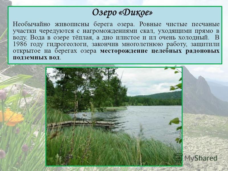 Озеро «Дикое» Необычайно живописны берега озера. Ровные чистые песчаные участки чередуются с нагромождениями скал, уходящими прямо в воду. Вода в озере тёплая, а дно илистое и ил очень холодный. В 1986 году гидрогеологи, закончив многолетнюю работу,