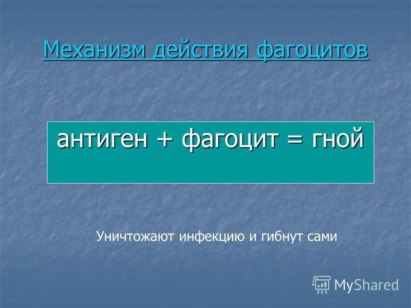 Механизм действия фагоцитов Механизм действия фагоцитов антиген + фагоцит = гной Уничтожают инфекцию и гибнут сами