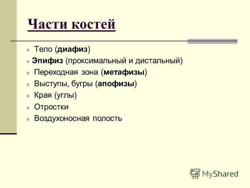 Части костей Тело (диафиз) Эпифиз (проксимальный и дистальный) Переходная зона (метафизы) Выступы, бугры (апофизы) Края (углы) Отростки Воздухоносная полость