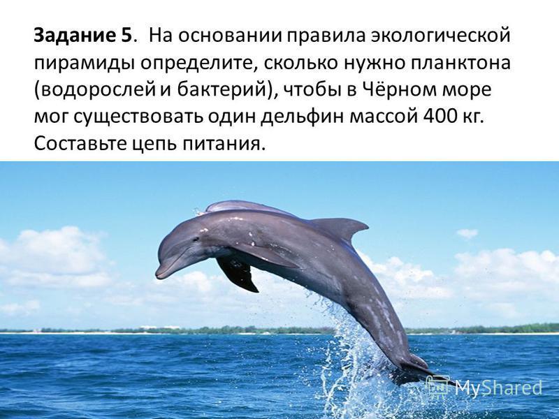 Задание 5. На основании правила экологической пирамиды определите, сколько нужно планктона (водорослей и бактерий), чтобы в Чёрном море мог существовать один дельфин массой 400 кг. Составьте цепь питания.