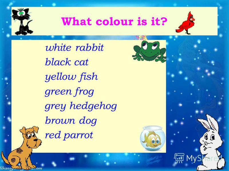 What colour is it? white rabbit black cat yellow fish green frog grey hedgehog brown dog red parrot