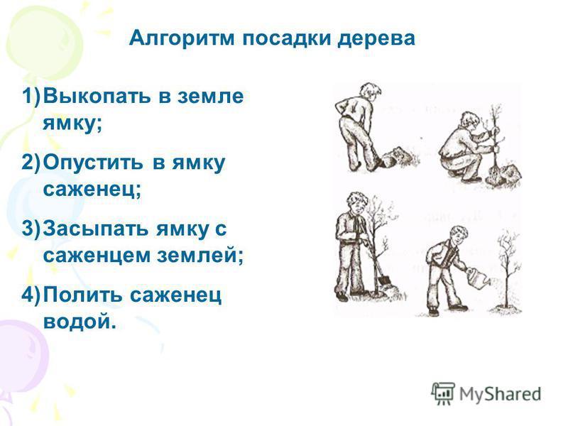 Алгоритм посадки дерева 1)Выкопать в земле ямку; 2)Опустить в ямку саженец; 3)Засыпать ямку с саженцем землей; 4)Полить саженец водой.