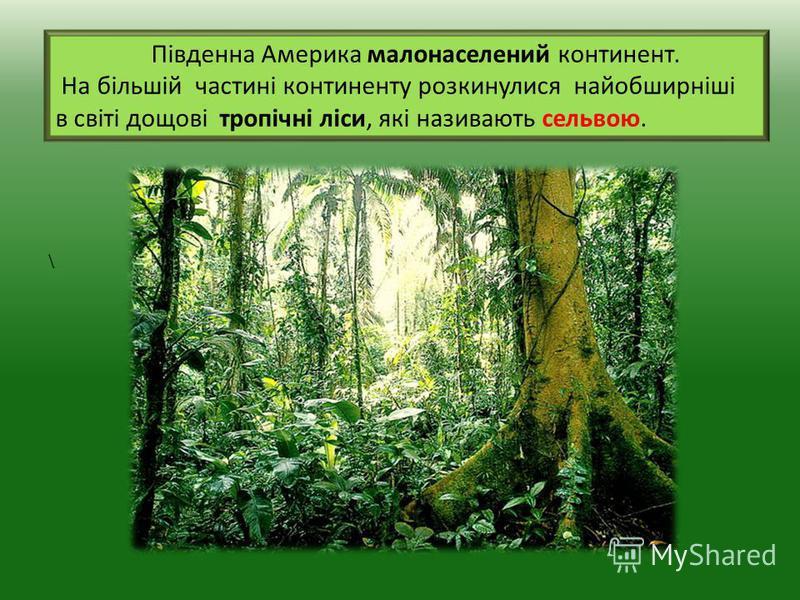 Південна Америка малонаселений континент. На більшій частині континенту розкинулися найобширніші в світі дощові тропічні ліси, які називають сельвою. \