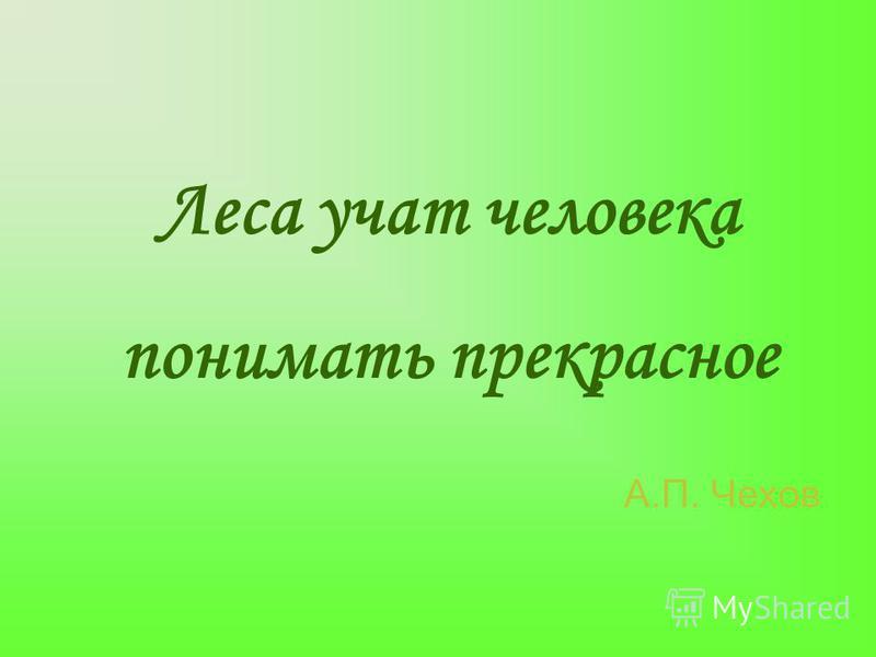 Леса учат человека понимать прекрасное А.П. Чехов