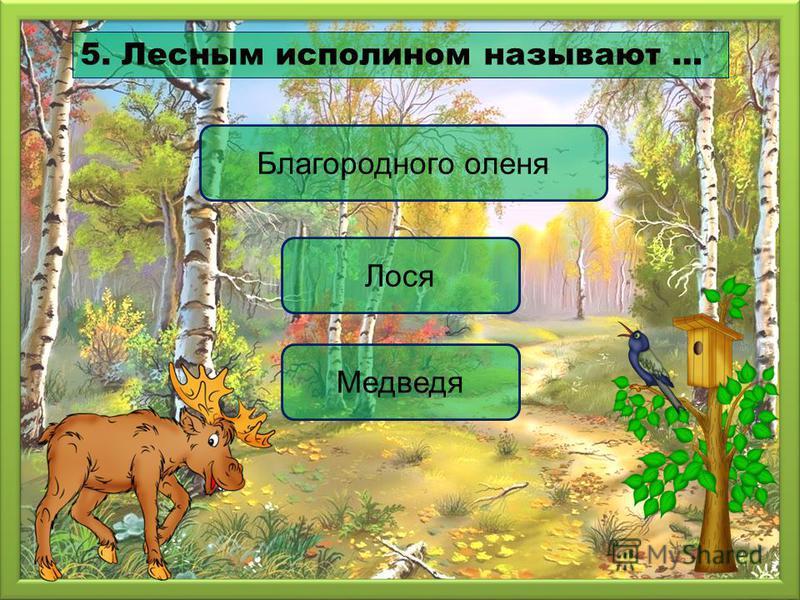 Лося Благородного оленя Медведя 5. Лесным исполином называют …