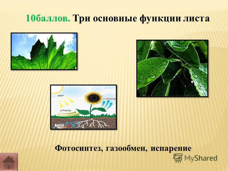 10 баллов. Три основные функции листа Фотосинтез, газообмен, испарение