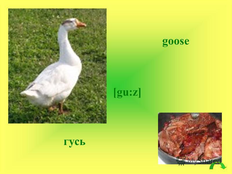 goose [gu:z] гусь