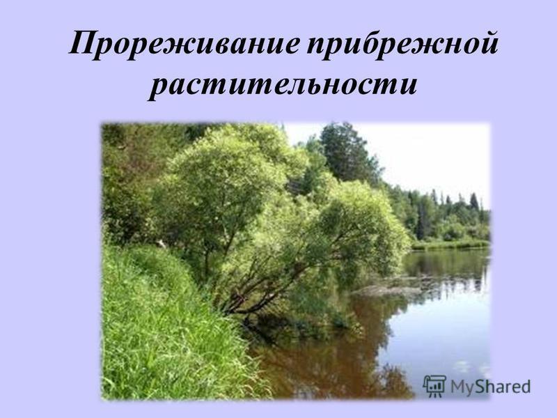 Прореживание прибрежной растительности