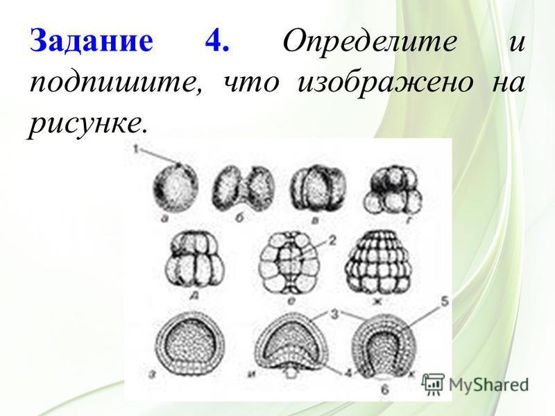 Задание 4. Определите и подпишите, что изображено на рисунке.