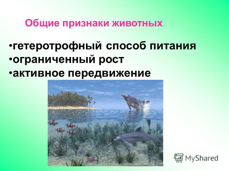 гетеротрофный способ питания ограниченный рост активное передвижение Общие признаки животных.