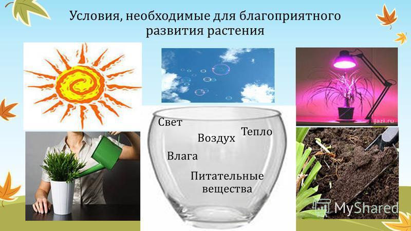 Условия, необходимые для благоприятного развития растения Тепло Воздух Влага Питательные вещества Свет