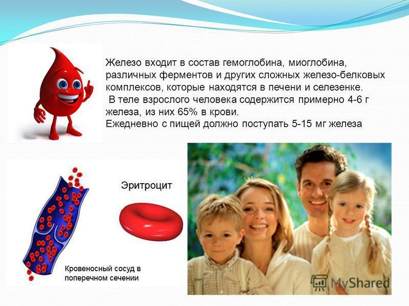 Железо входит в состав гемоглобина, миоглобина, различных ферментов и других сложных железо-белковых комплексов, которые находятся в печени и селезенке. В теле взрослого человека содержится примерно 4-6 г железа, из них 65% в крови. Ежедневно с пищей
