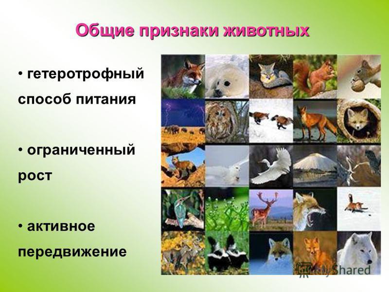 гетеротрофный способ питания ограниченный рост активное передвижение Общие признаки животных
