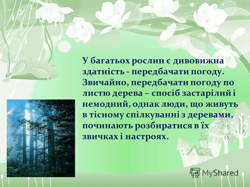 У багатьох рослин є дивовижна здатність - передбачати погоду. Звичайно, передбачати погоду по листю дерева – спосіб застарілий і немодний, однак люди, що живуть в тісному спілкуванні з деревами, починають розбиратися в їх звичках і настроях.