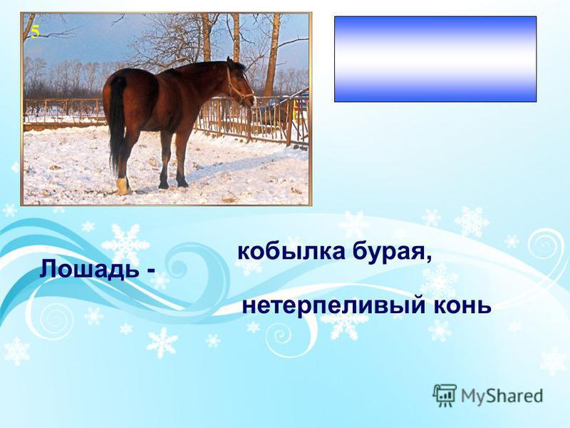 Настроение приятной и светлой мечты Лошадь - кобылка бурая, нетерпеливый конь 5