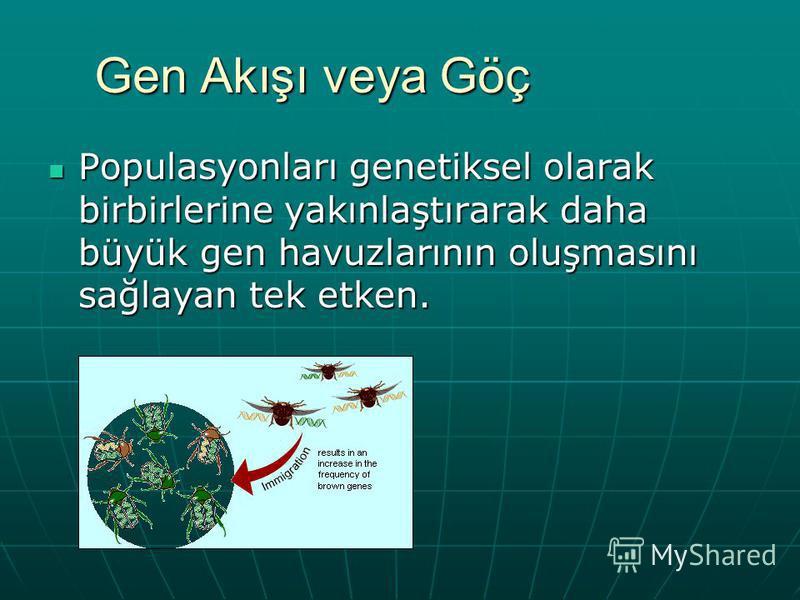 Gen Akışı veya Göç Populasyonları genetiksel olarak birbirlerine yakınlaştırarak daha büyük gen havuzlarının oluşmasını sağlayan tek etken. Populasyonları genetiksel olarak birbirlerine yakınlaştırarak daha büyük gen havuzlarının oluşmasını sağlayan