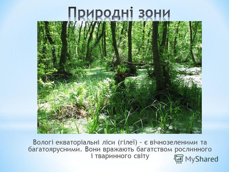 Вологі екваторіальні ліси (гілеї) – є вічнозеленими та багатоярусними. Вони вражають багатством рослинного і тваринного світу