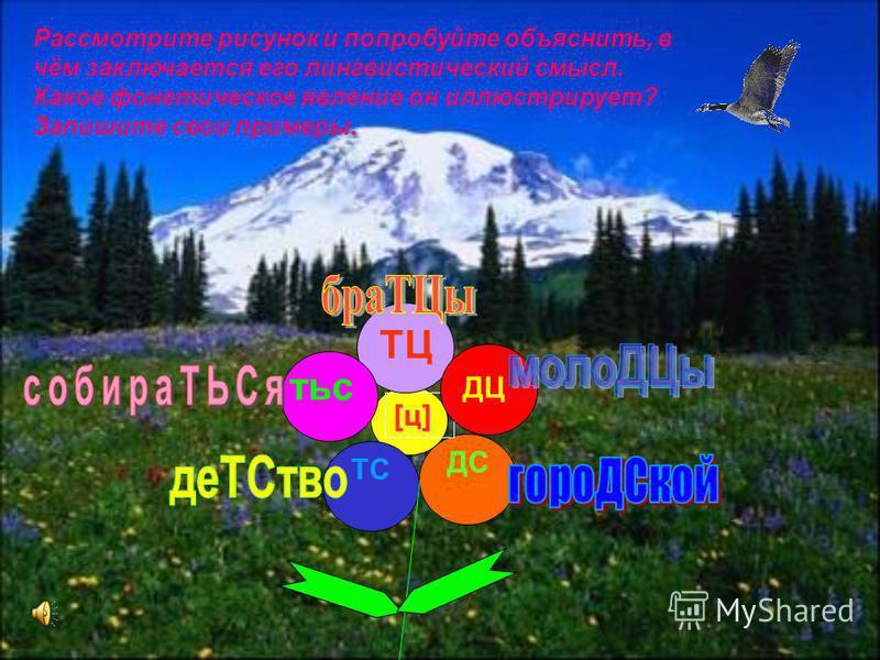 12 ДС [ц][ц][ц][ц] ТС ТЦ тис ДЦ Рассмотрите рисунок и попробуйте объяснить, в чём заключается его лингвистический смысл. Какое фонетическое явление он иллюстрирует? Запишите свои примеры.