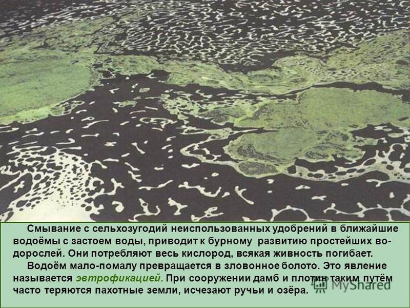 Смывание с сельхозугодий неиспользованных удобрений в ближайшие водоёмы с застоем воды, приводит к бурному развитию простейших водорослей. Они потребляют весь кислород, всякая живность погибает. Водоём мало-помалу превращается в зловонное болото. Это