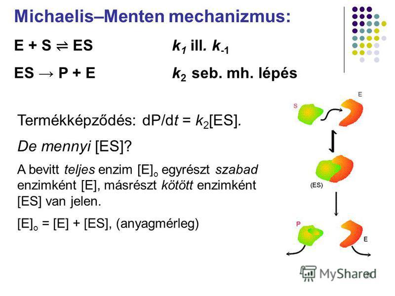 39 Michaelis–Menten mechanizmus: E + S ES k 1 ill. k -1 ES P + E k 2 seb. mh. lépés Termékképződés: dP/dt = k 2 [ES]. De mennyi [ES]? A bevitt teljes enzim [E] o egyrészt szabad enzimként [E], másrészt kötött enzimként [ES] van jelen. [E] o = [E] + [