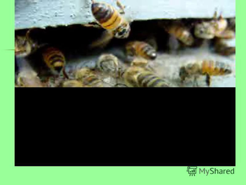 Реши задачу, и ты узнаешь, сколько килограммов мёда заготавливает моя семья за лето. Пасечник отвёз мёд, собранный с одного улья, в 3 детских сада по 20 кг в каждый и 30 кг в школу. Сколько кг мёда собрал пасечник с одного улья? МЁД ?