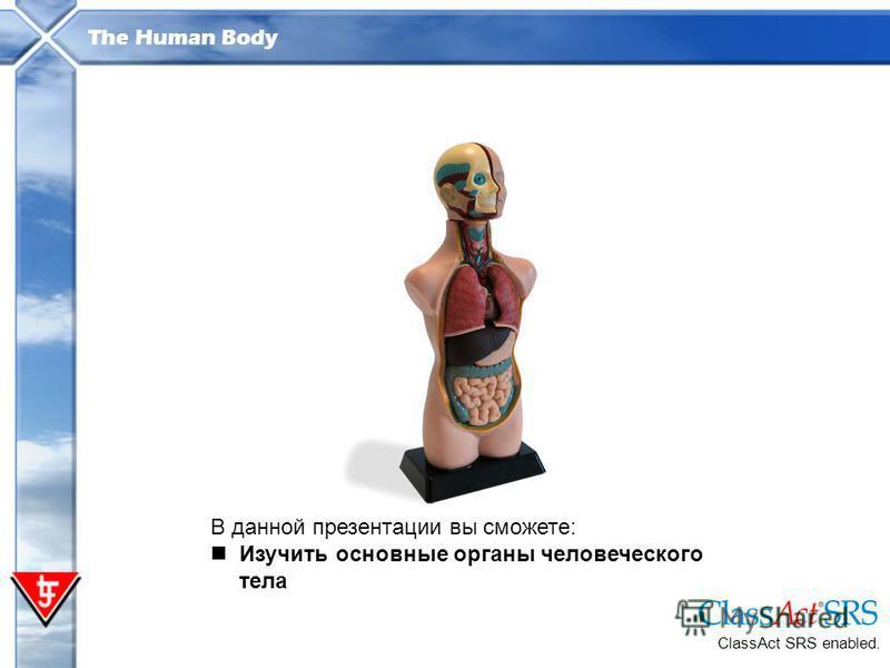 The Human Body В данной презентации вы сможете: Изучить основные органы человеческого тела ClassAct SRS enabled.