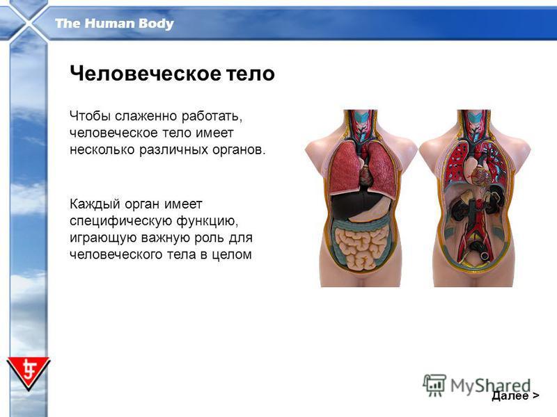 The Human Body Далее > Человеческое тело Чтобы слаженно работать, человеческое тело имеет несколько различных органов. Каждый орган имеет специфическую функцию, играющую важную роль для человеческого тела в целом