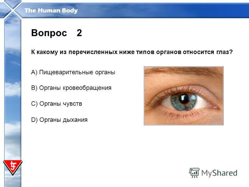 The Human Body 2 К какому из перечисленных ниже типов органов относится глаз? Вопрос A) Пищеварительные органы B) Органы кровообращения С) Органы чувств D) Органы дыхания