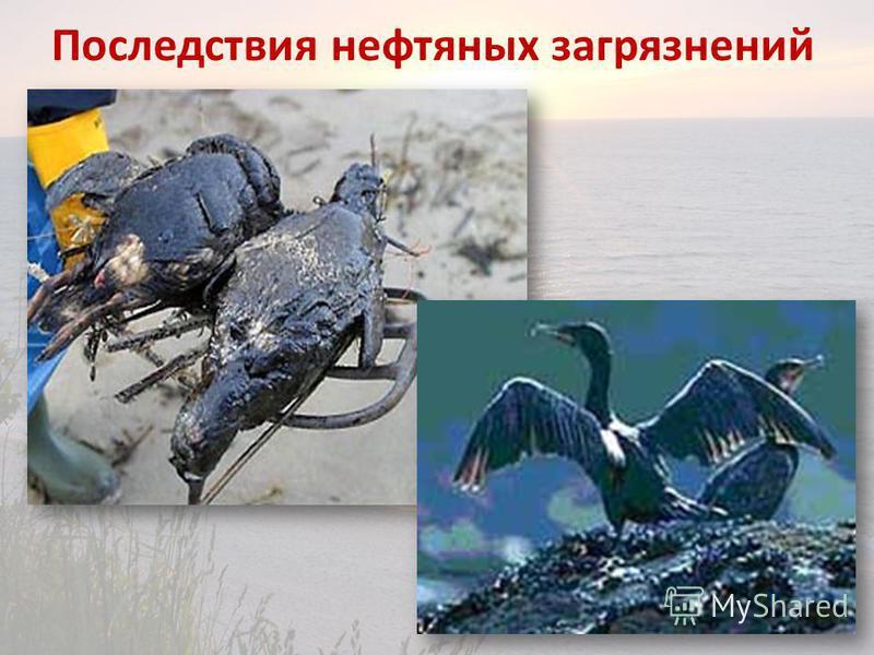 Последствия нефтяных загрязнений