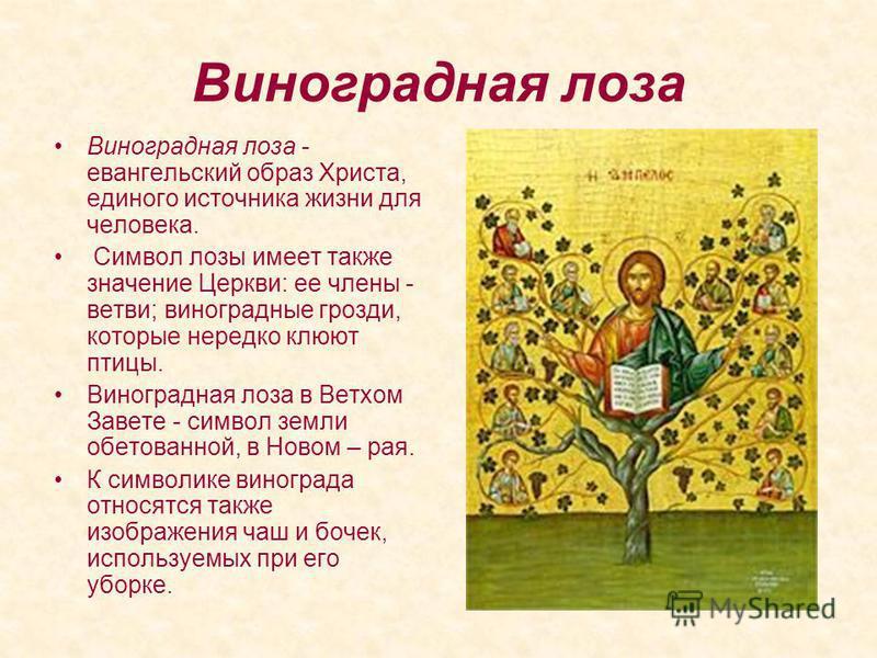 Виноградная лоза Виноградная лоза - евангельский образ Христа, единого источника жизни для человека. Символ лозы имеет также значение Церкви: ее члены - ветви; виноградные грозди, которые нередко клюют птицы. Виноградная лоза в Ветхом Завете - символ