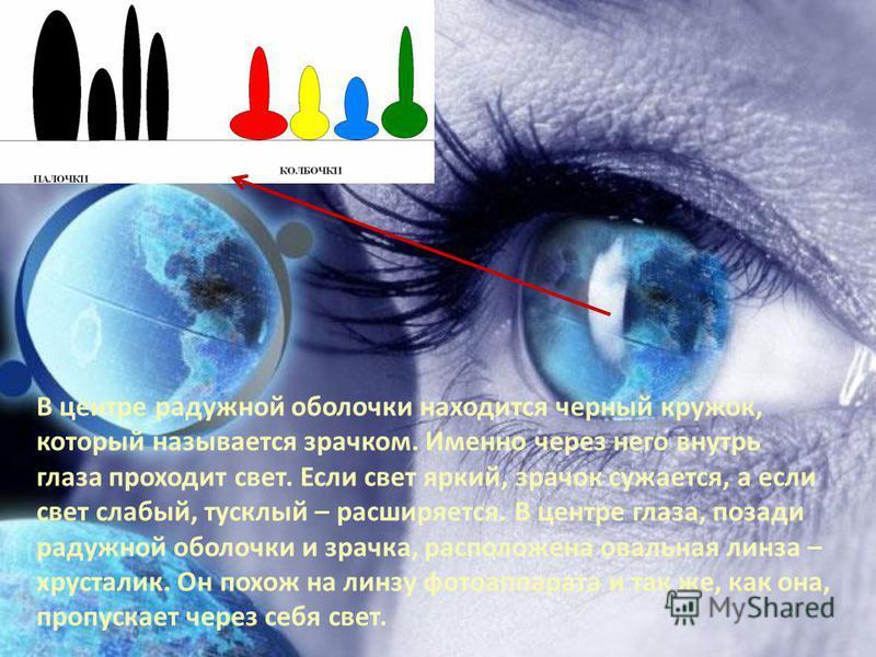 В центре радужной оболочки находится черный кружок, который называется зрачком. Именно через него внутрь глаза проходит свет. Если свет яркий, зрачок сужается, а если свет слабый, тусклый – расширяется. В центре глаза, позади радужной оболочки и зрач