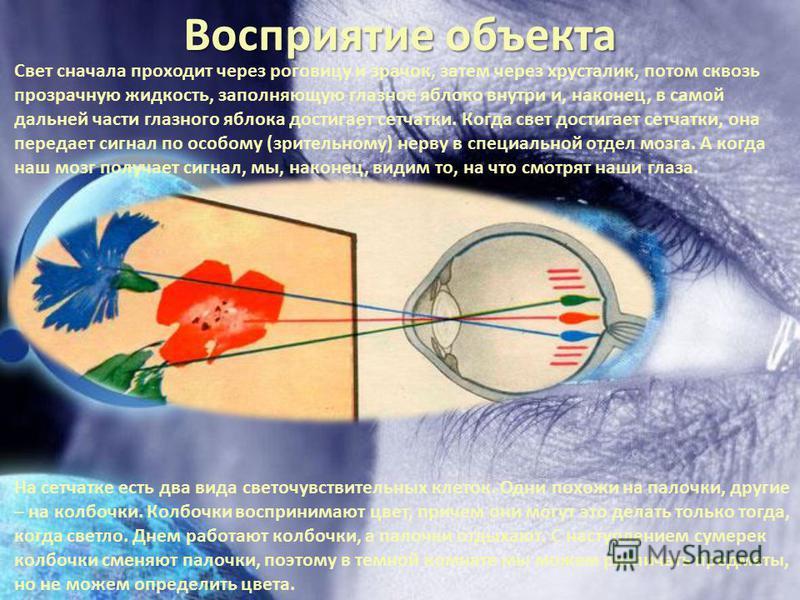 Восприятие объекта На сетчатке есть два вида светочувствительных клеток. Одни похожи на палочки, другие – на колбочки. Колбочки воспринимают цвет, причем они могут это делать только тогда, когда светло. Днем работают колбочки, а палочки отдыхают. С н