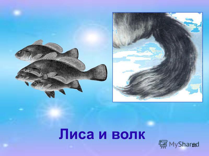 26 Лиса и волк