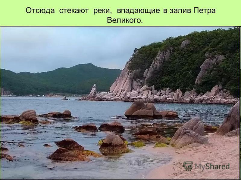 Отсюда стекают реки, впадающие в залив Петра Великого.