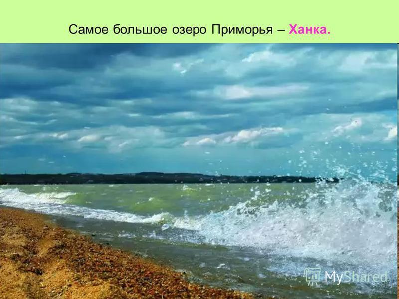 Самое большое озеро Приморья – Ханка.