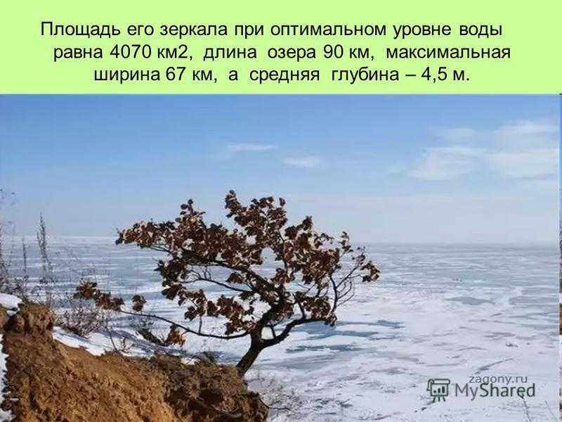 Площадь его зеркала при оптимальном уровне воды равна 4070 км 2, длина озера 90 км, максимальная ширина 67 км, а средняя глубина – 4,5 м.