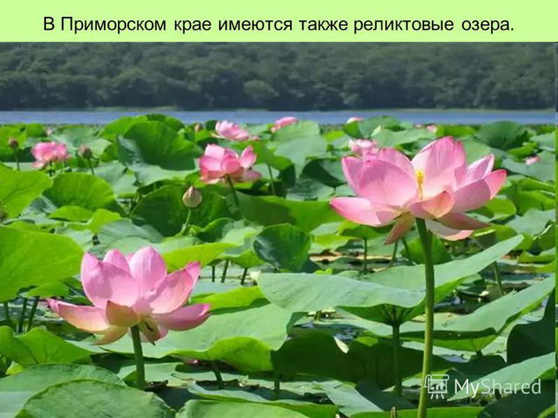 В Приморском крае имеются также реликтовые озера.